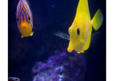 proxi poisson